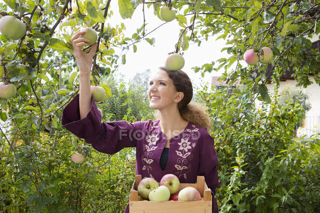 Teenage girl picking apples in orchard — Stock Photo