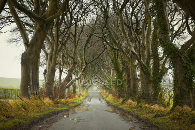 Wet rural road surrounded by trees — Stock Photo