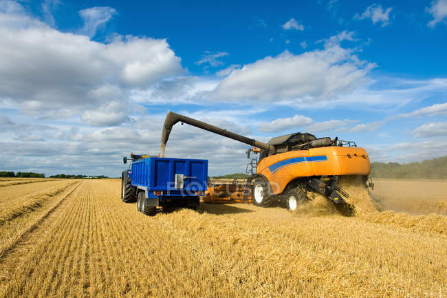 Combine harvester and tractor, harvesting wheat — Stock Photo