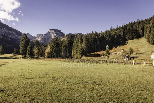 Landschaft mit Wald und Berge, Bayern, Deutschland — Stockfoto