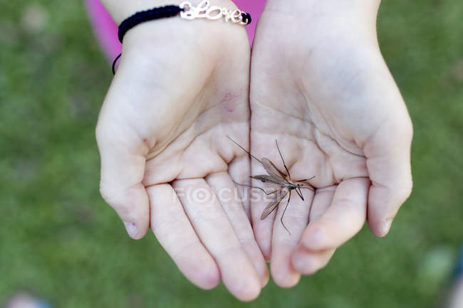 Insecte dans les paumes des mains coupées — Photo de stock