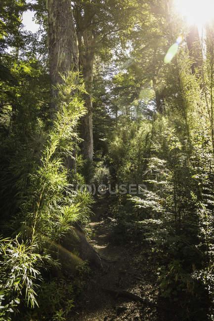 Rear view of female hiker trekking through forest, Nahuel Huapi National Park, Rio Negro, Argentina — Stock Photo