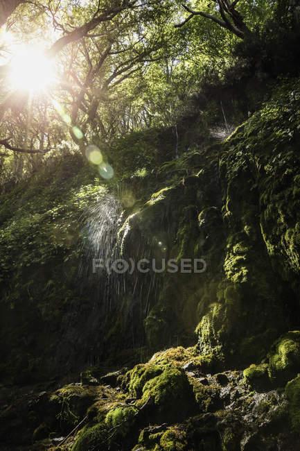 Cascata che spruzza sul muschio in foresta illuminata dal sole, riserva nazionale di Coyhaique, Provincia di Coyhaique, Cile — Foto stock