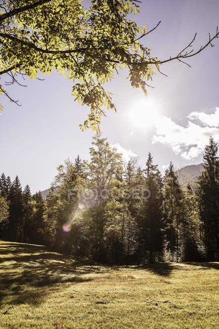 Поле уютной и красивой лесной пейзаж, Бавария, Германия — стоковое фото