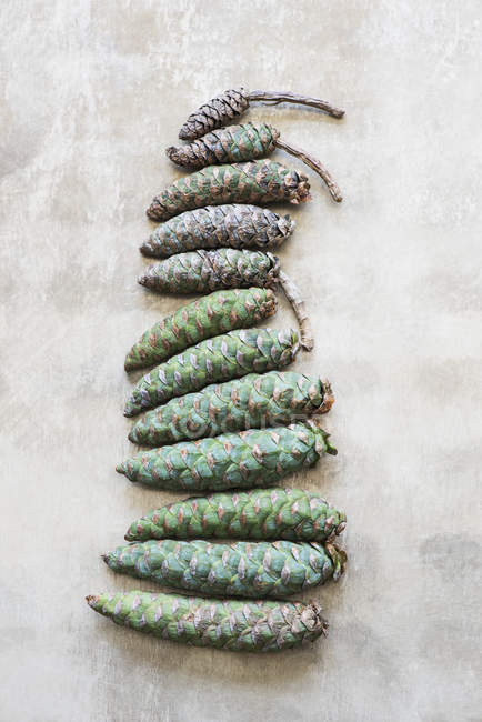 Top view of Pine cones arranged in row on white surface — Stock Photo