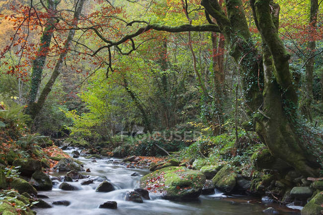 Majestic landscape with rapid creek running through forest — Stock Photo
