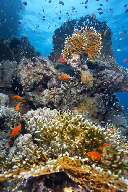 Unterwasser-Ansicht von Fischen an Riffen — Stockfoto