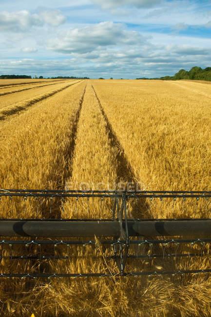 Moissonneuse batteuse en champ, récolte de blé, de se concentrer sur les lames — Photo de stock