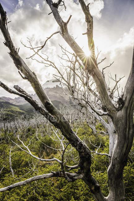 Iluminado pelo sol esqueléticas árvores no Parque Nacional Los Glaciares, Patagónia, Argentina — Fotografia de Stock