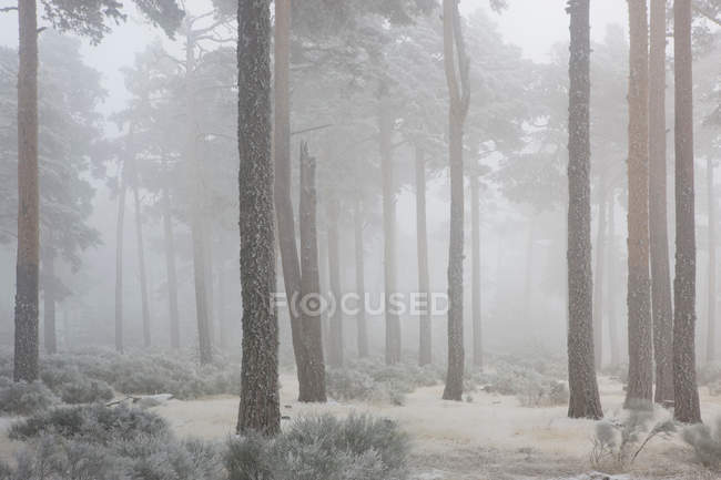 Árvores que crescem em um lindo bosque nevado — Fotografia de Stock