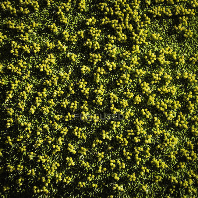 Top view of green plants, Nahuel Huapi National Park, Rio Negro, Argentina — Stock Photo