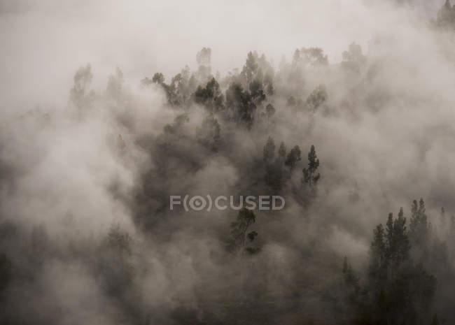 Niebla de la mañana en bosque sobre Tarma, Junín, Perú, Sudamérica - foto de stock