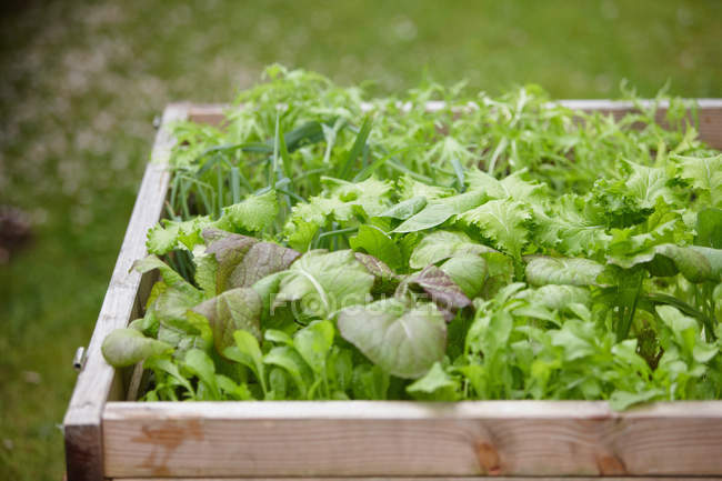 Green Plants and herbs growing in flowerbox — Stock Photo
