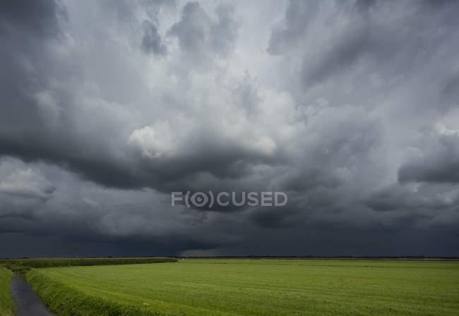 Temporale sui campi di mais ed erba, Oosterhout, Brabante Settentrionale, Paesi Bassi — Foto stock