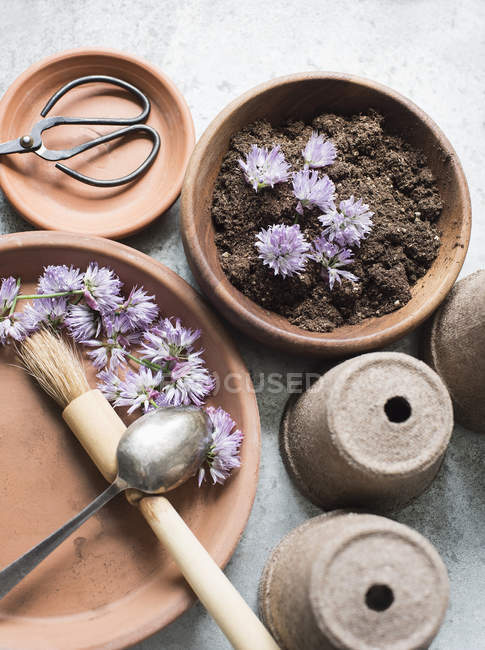 Buds of dry chives flowers and tools for planting on table — Stock Photo