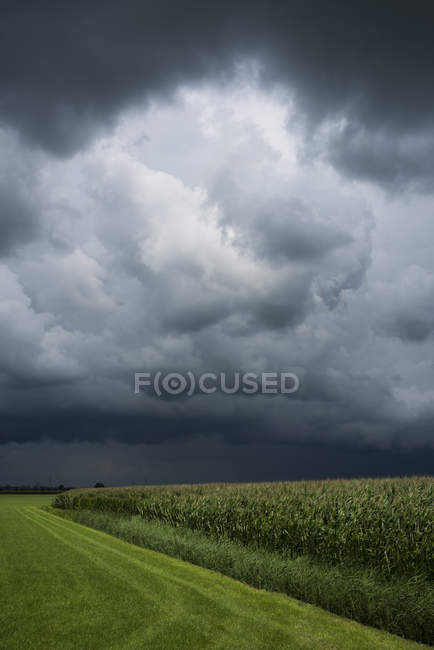 A thunderstorm over corn and grass fields, Oosterhout, North Brabant, Netherlands — Stock Photo