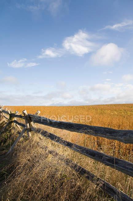 Campo de soja com cerca tradicional e céu azul nublado — Fotografia de Stock