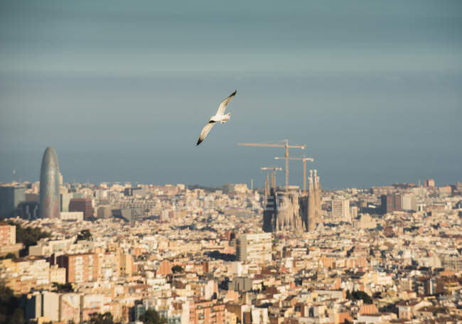Cityscape view with flying gull and Sagrada Familia, Barcelona, Spain — Stock Photo