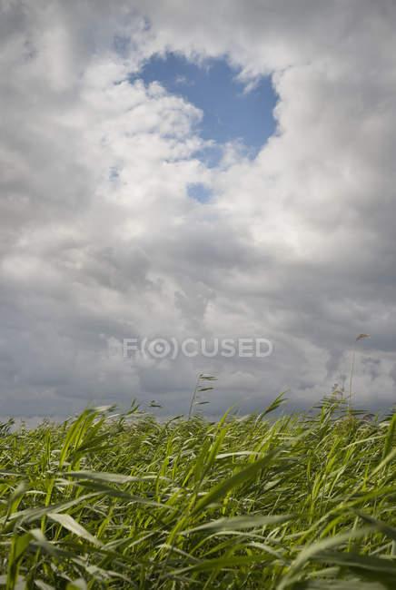 Ein Loch in den Wolken in der friesischen Seenplatte, Sneek, Friesland, Niederlande — Stockfoto