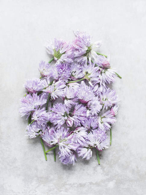 Cut chives flowers on a light background — Stock Photo