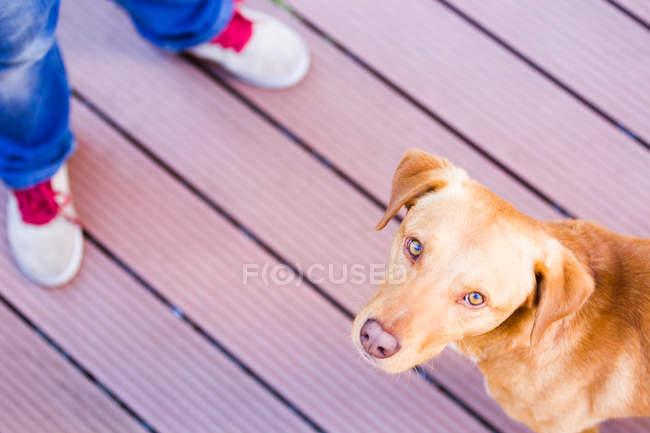 Blick von oben auf den Hund — Stockfoto