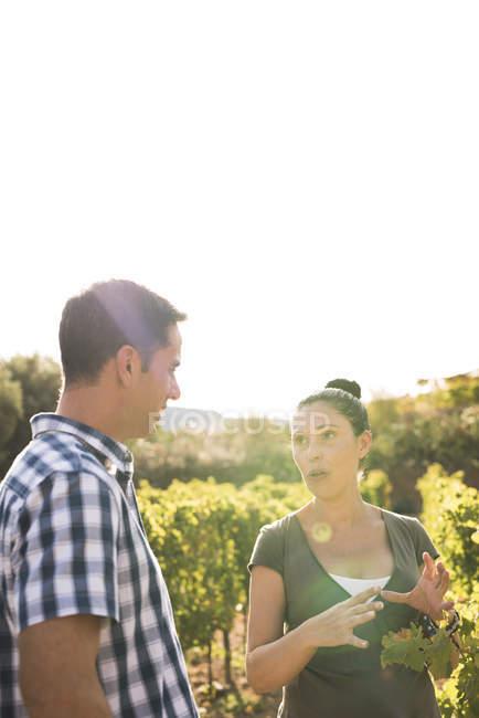 Male and female winemakers talking in sunlit vineyard, Las Palmas, Gran Canaria, Spain — Stock Photo