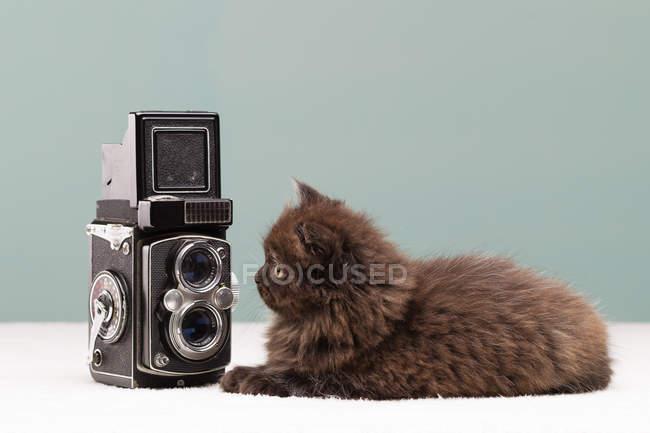 Gattino persiano guardando macchina fotografica di film retrò — Foto stock