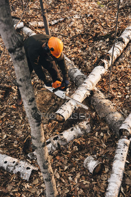 High angle view of man chainsawing tree trunk in autumn forest — Stock Photo