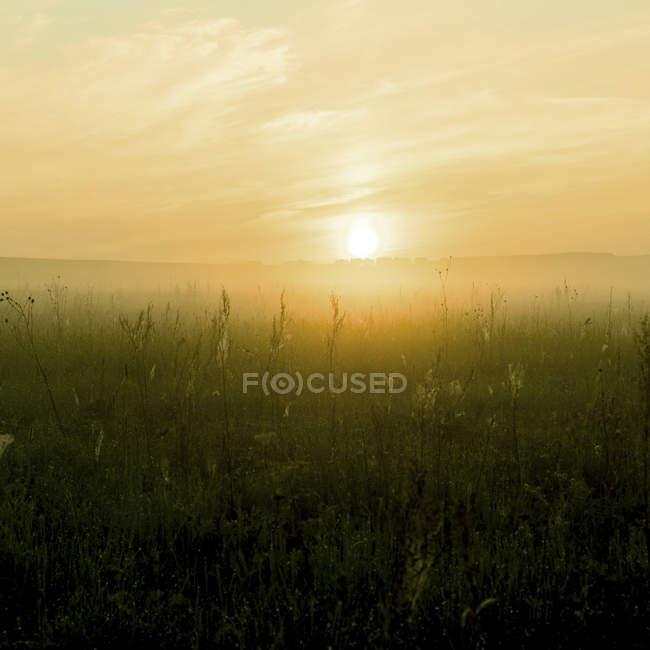 La niebla sobre el suelo, Ural, Sverdlovsk, Rusia - foto de stock