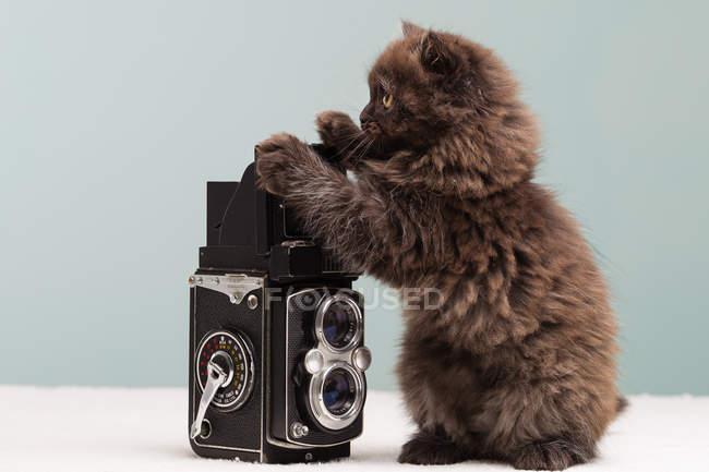 Gatinho persa investigando câmera — Fotografia de Stock
