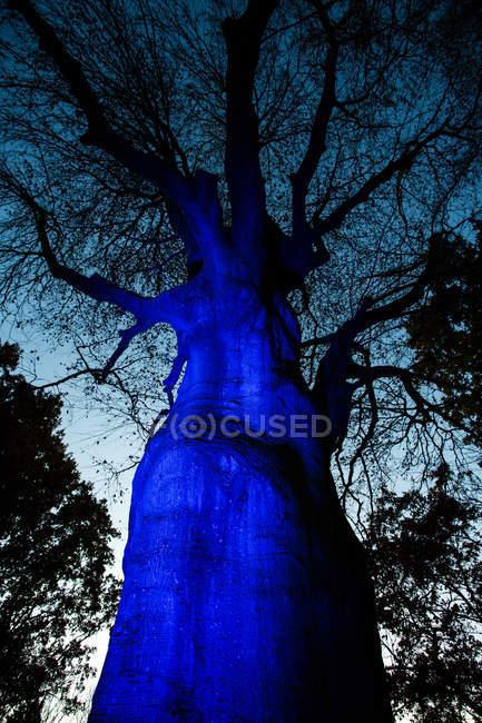 Tree trunk lit up with dark blue light at twilight — Stock Photo