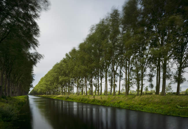 Trees on a stormy day, Leopold Canal,  Damme, West Flanders, Belgium — Stock Photo