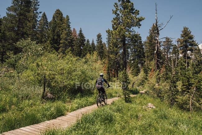 Homme faisant du vélo sur la piste à travers la forêt, Mammoth Lakes, Californie, USA, Amérique du Nord — Photo de stock