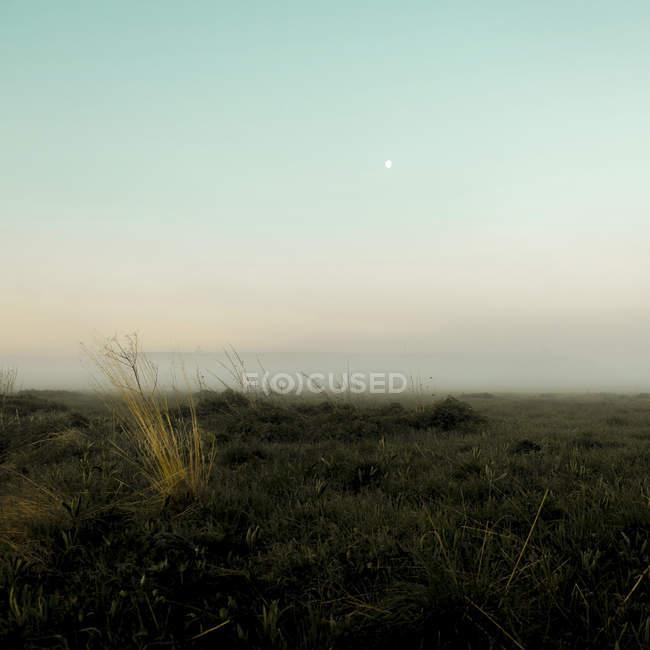 Névoa sobre o chão, Ural, Sverdlovsk, Rússia — Fotografia de Stock