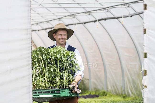 Farmer in greenhouse carrying tray of plants — Stock Photo