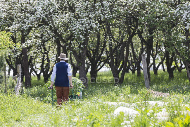 Rear view of farmer pushing barrow of plants in field — Stock Photo