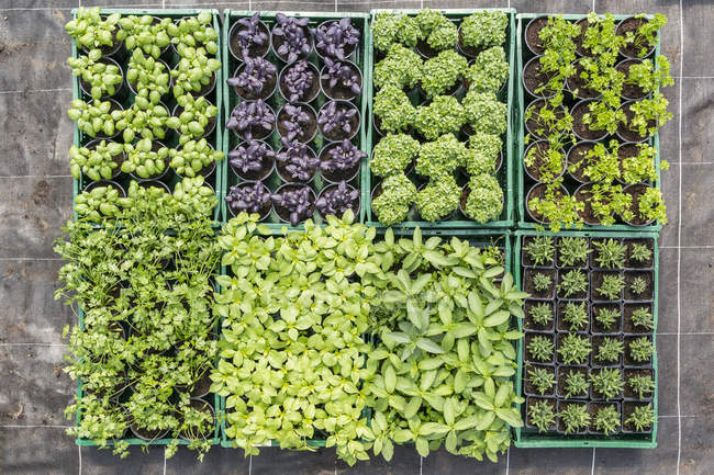 Overhead view of variety of potted plants in tray — Stock Photo