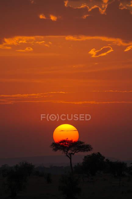 Magnifique coucher de soleil avec des arbres contre le ciel jaune en tanzanie — Photo de stock