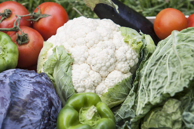 Variety of homegrown vegetables, full frame — Stock Photo