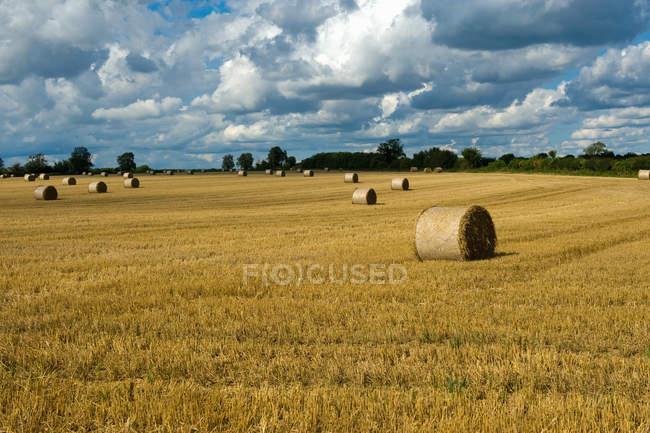 Rangées de balles de foin dans domaine rural récolté — Photo de stock
