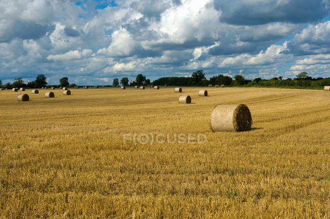Rows of hay bales in harvested rural field — Stock Photo