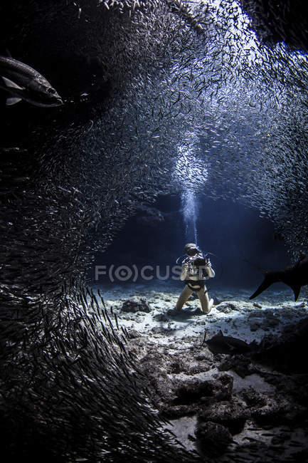Vue sous-marine du plongeur photographiant la vie marine — Photo de stock