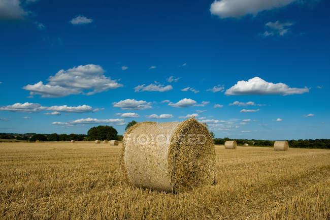 Balle di fieno nel campo rurale raccolto — Foto stock