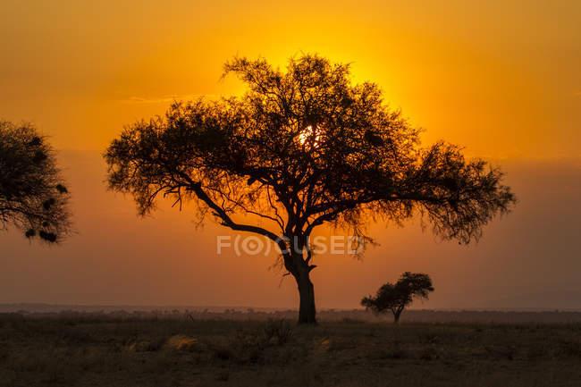 Parque Nacional de Tarangire, Tanzania - foto de stock