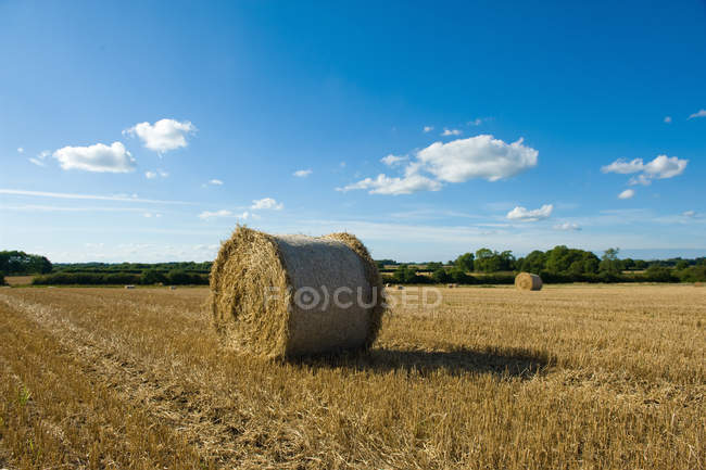 Hay bales in harvested rural field — Stock Photo