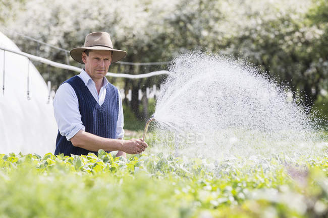 Farmer watering growth plants with hosepipe — Stock Photo
