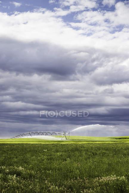 Зрошувальні сільськогосподарських земель, Монтана, нас — стокове фото