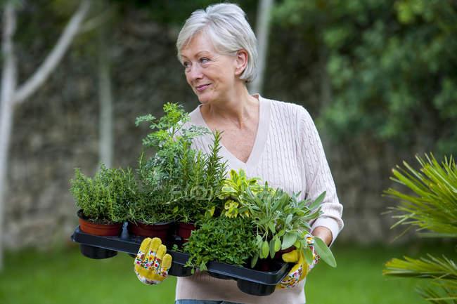Senior woman in garden, holding plants — Stock Photo