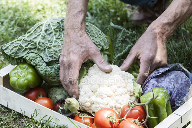 Box of homegrown vegetables — Stock Photo