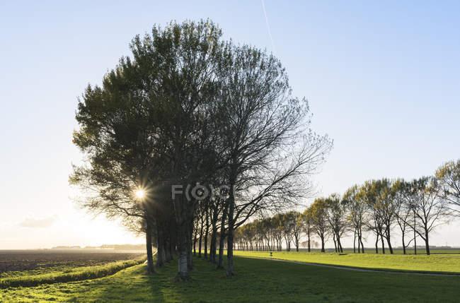 Route rurale bordée d'arbres, Zeewolde, Flevoland, Pays-Bas, Europe — Photo de stock